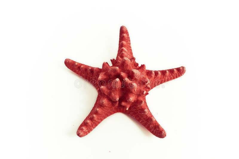 Estrela do Mar Vermelho imagens de stock royalty free