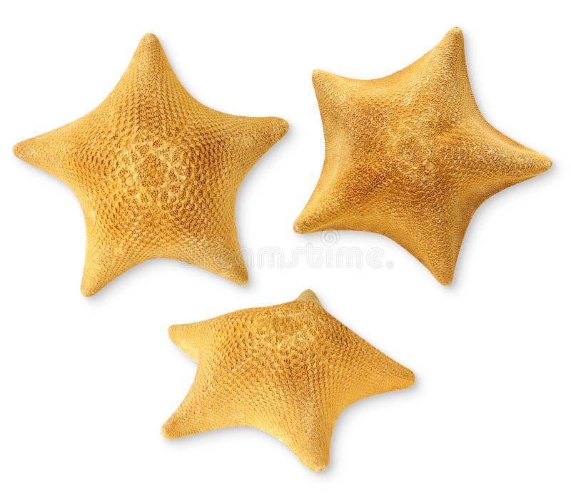 Estrelas de mar foto de stock royalty free
