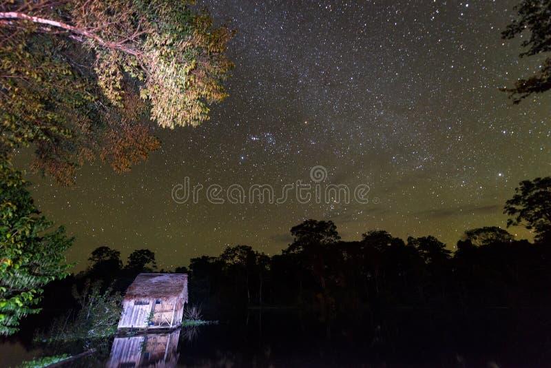 Estrelas do Amazonas imagens de stock