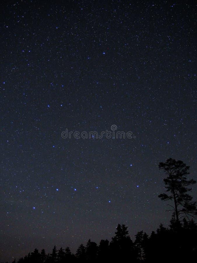 Estrelas do céu noturno, constelação do dipper grande fotografia de stock royalty free