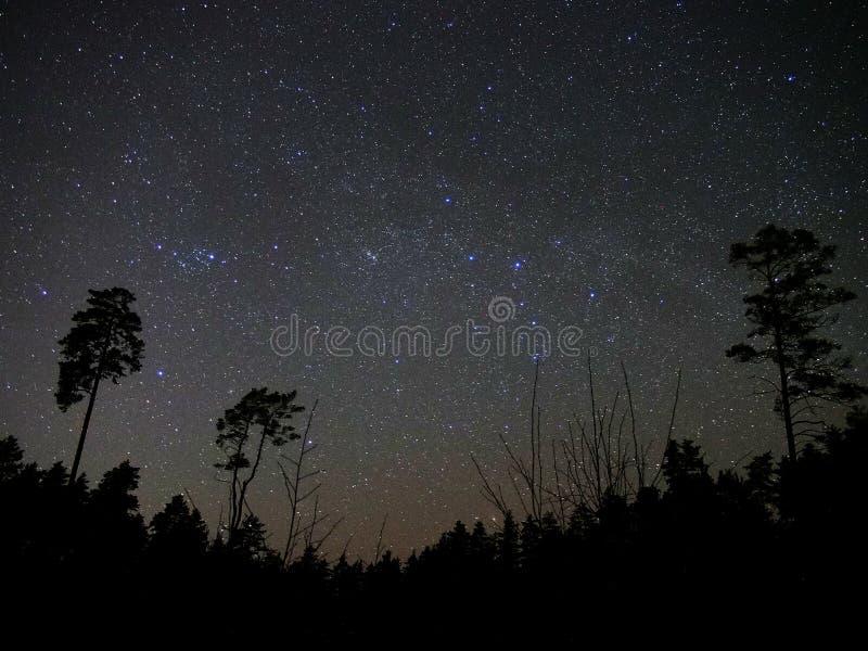 Estrelas do céu noturno e atmosfera da floresta fotos de stock