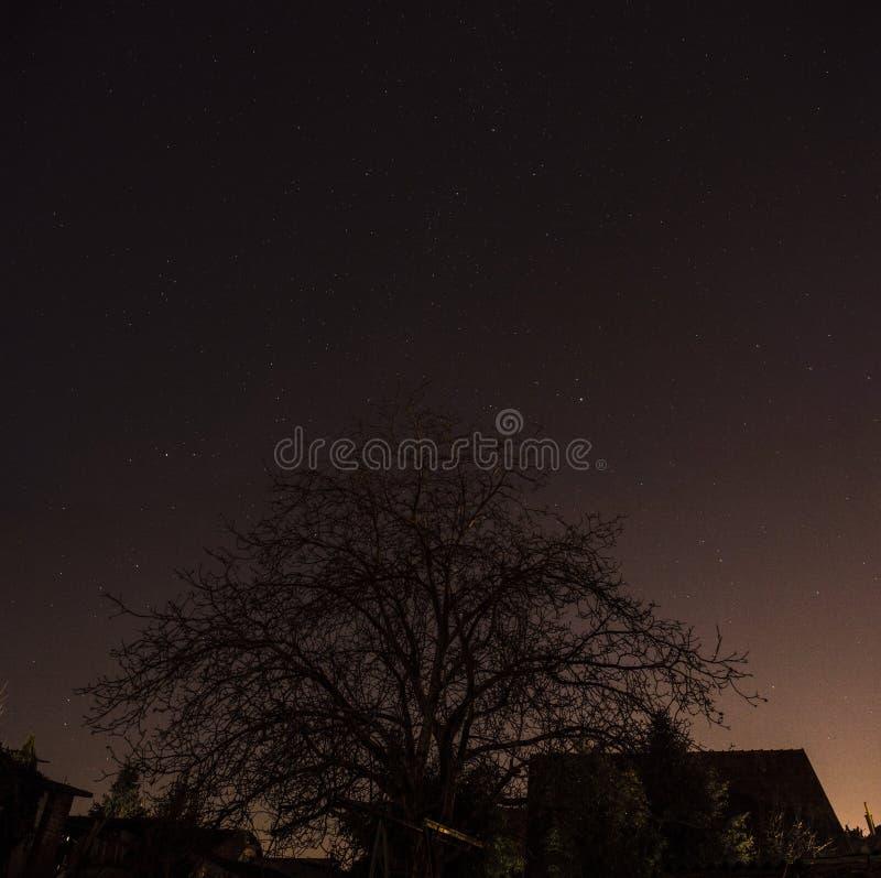 Estrelas no céu nocturno foto de stock