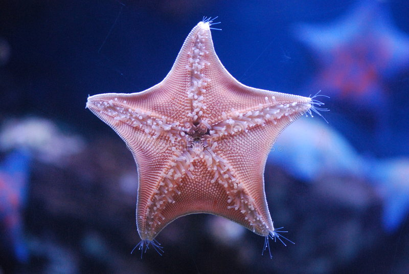 Estrella de mar fotos de archivo