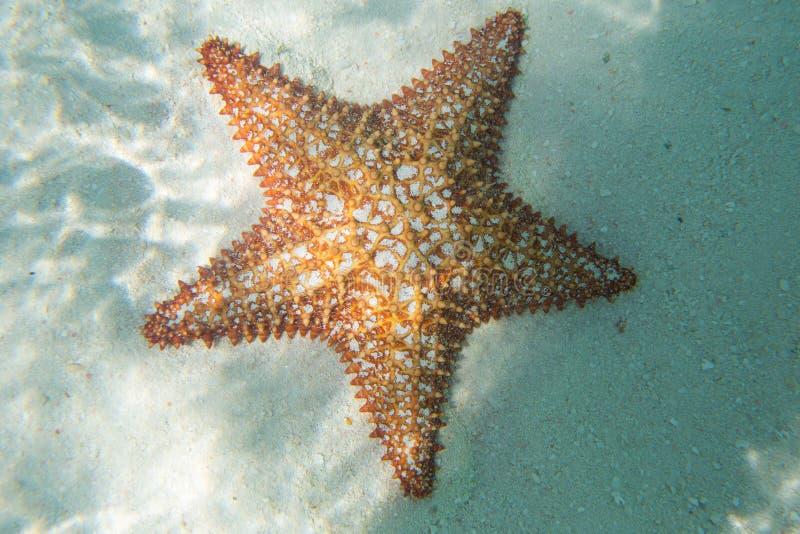 Estrella de mar anaranjada en el agua de la turquesa foto de archivo libre de regalías