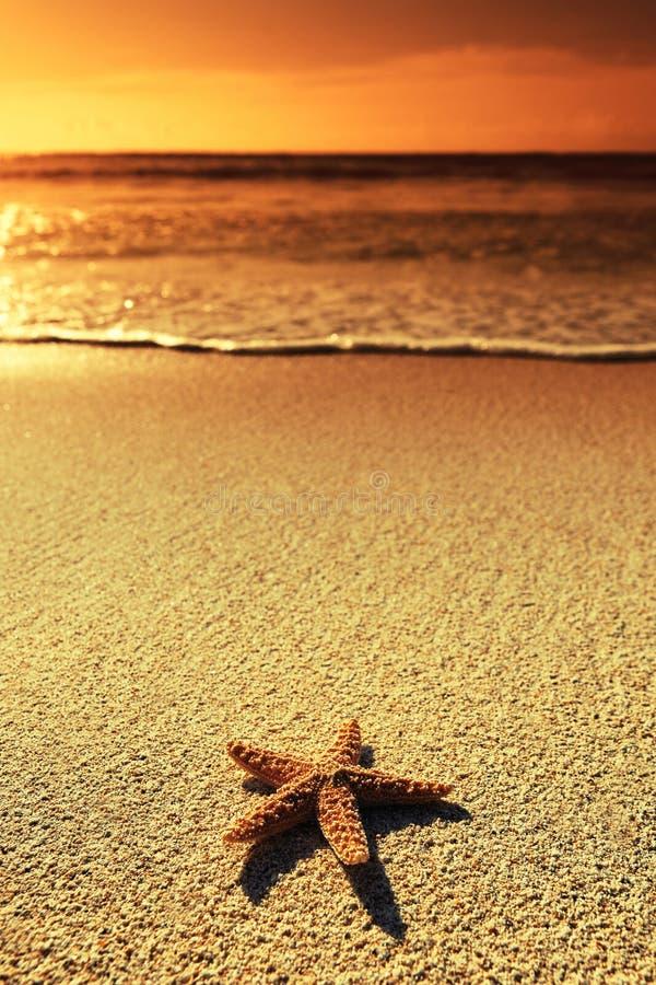 Estrella de mar de la puesta del sol fotos de archivo