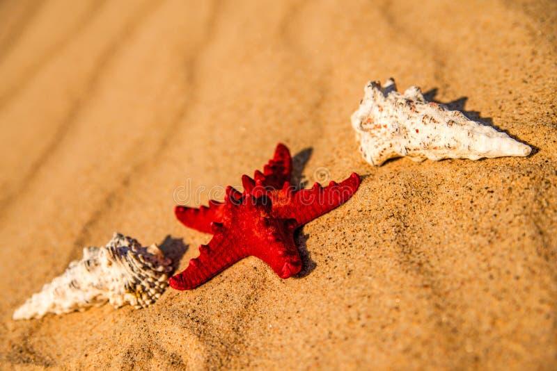 Estrella de mar en una playa arenosa imagen de archivo