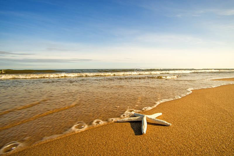 Estrella de mar en una playa con resaca fotos de archivo