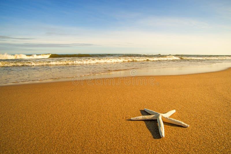 Estrella de mar en una playa con resaca fotografía de archivo libre de regalías