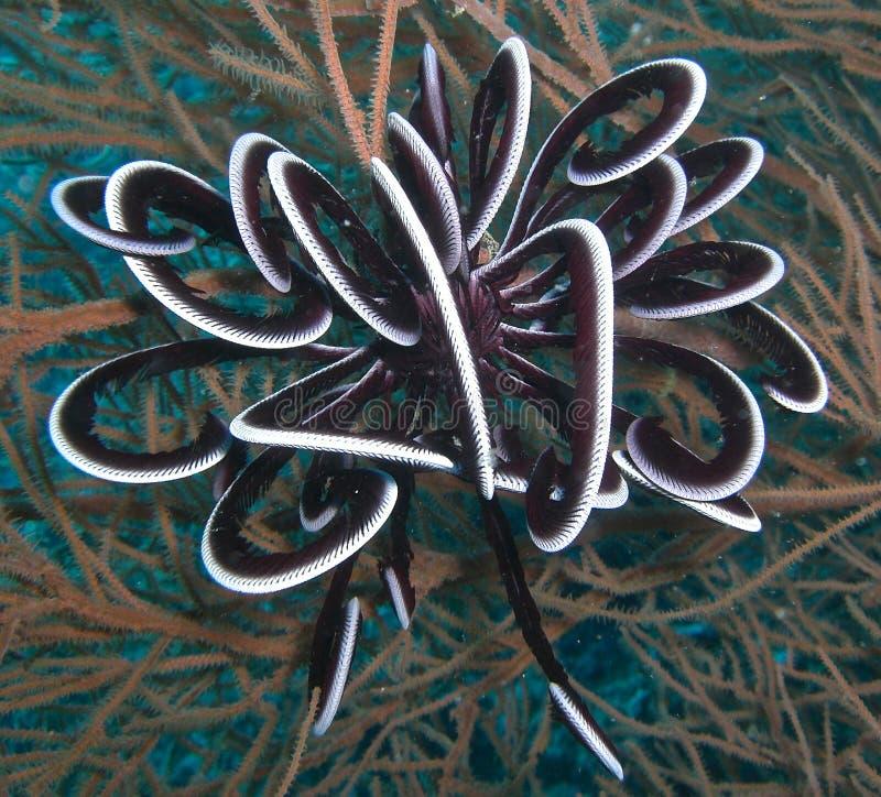 Estrella de pluma blanco y negro foto de archivo libre de regalías