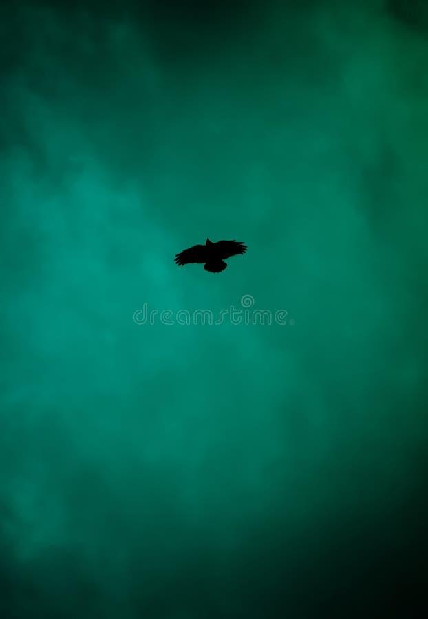 Estrella del cuervo imagen de archivo libre de regalías