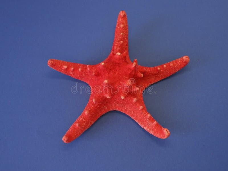 Estrella roja de los pescados imagenes de archivo