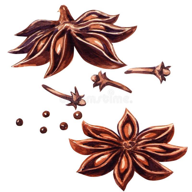 Estrella y clavos del anís aislados ilustración del vector