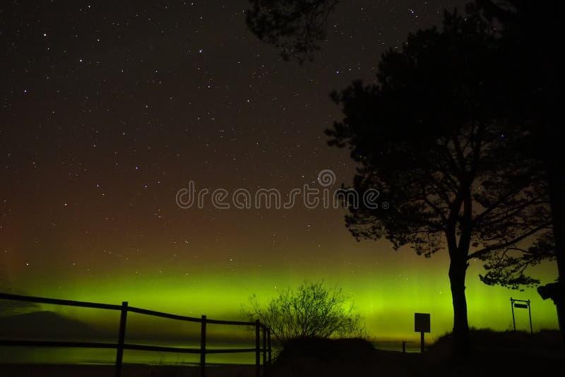 Estrellas de la constelación del cazo grande de las luces polares de la aurora del árbol imagenes de archivo