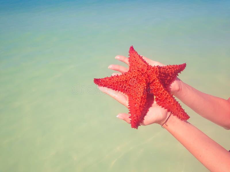 Estrellas de mar foto de archivo