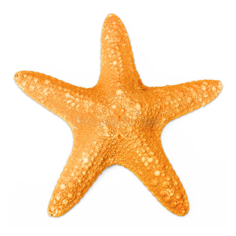 Estrellas de mar aisladas en blanco imagen de archivo
