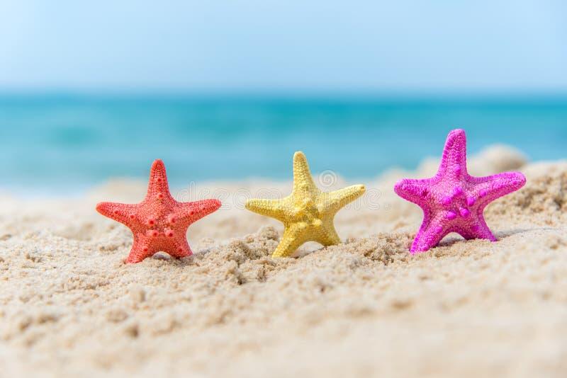Estrellas de mar coloridas en el cielo azul del fondo de la playa foto de archivo