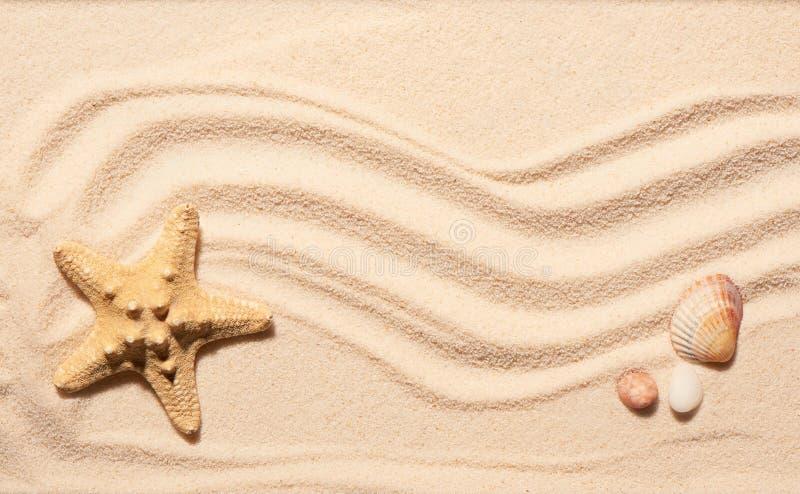 Estrellas de mar, concha marina de la concha de peregrino y dos piedras en la arena de la playa imagenes de archivo