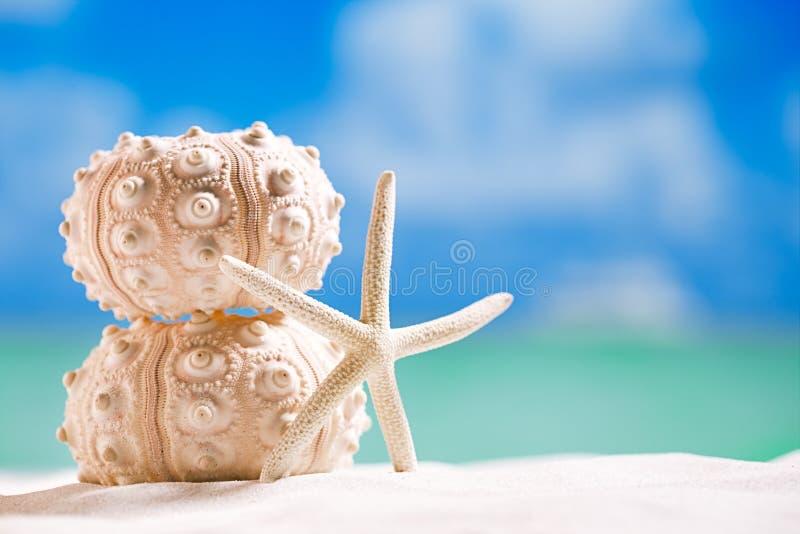 Estrellas de mar de la cáscara del pilluelo con el océano, en la playa blanca de la arena imagen de archivo libre de regalías