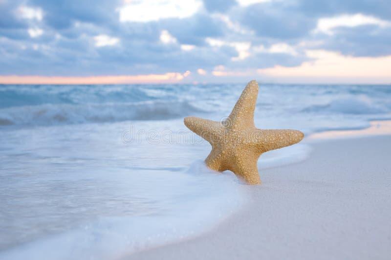 Estrellas de mar de la estrella de mar en la playa, el mar azul y la salida del sol imagen de archivo libre de regalías