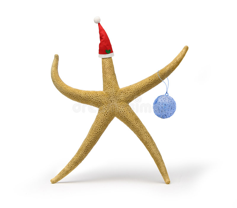 Estrellas de mar de la Navidad foto de archivo libre de regalías