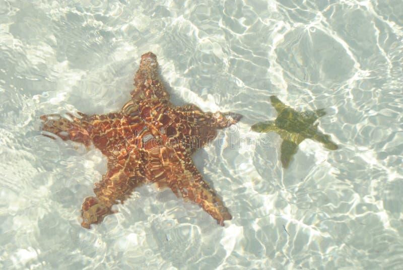 Estrellas de mar debajo del agua foto de archivo