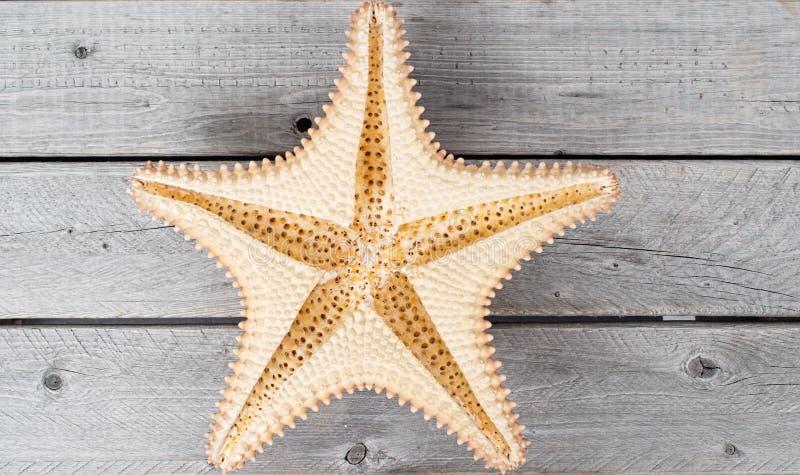 Estrellas de mar del Caribe al revés foto de archivo