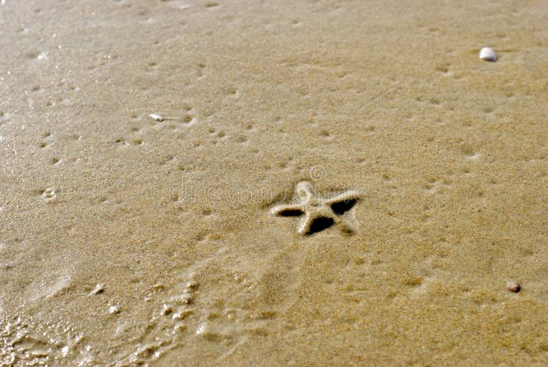 Estrellas de mar del mar foto de archivo libre de regalías