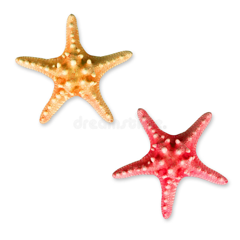 Estrellas de mar del verano foto de archivo
