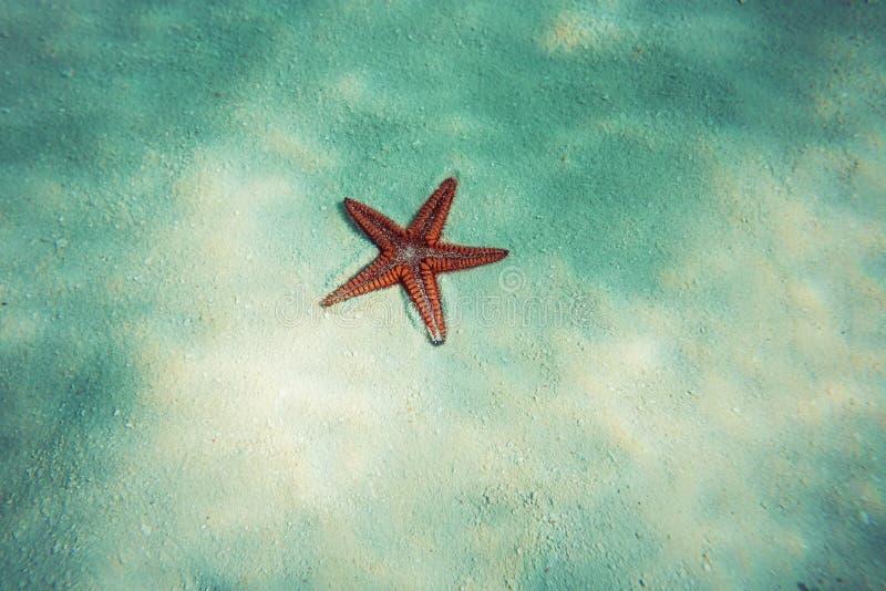 Estrellas de mar en agua de mar azul con el reflejo de luz foto de archivo