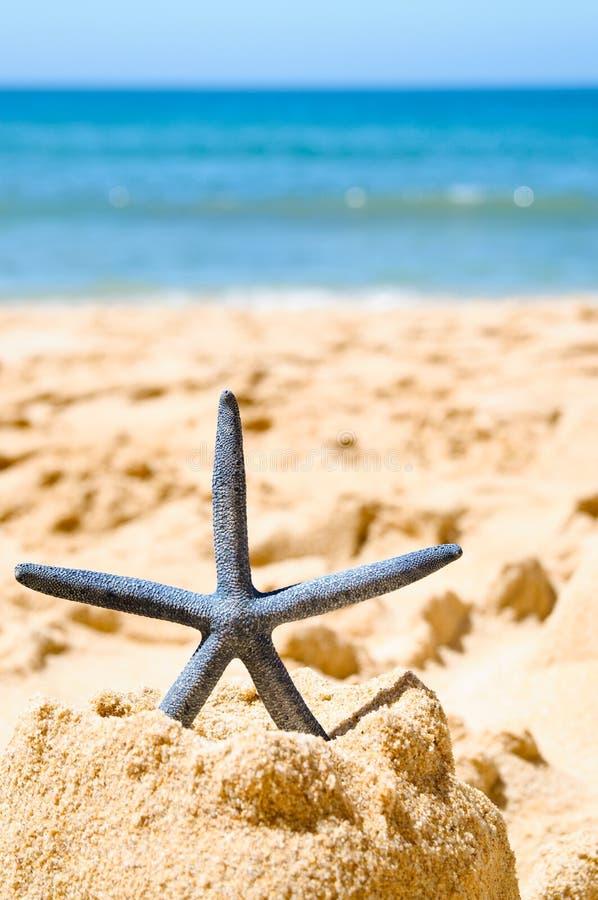 Estrellas de mar en castillo de arena foto de archivo libre de regalías