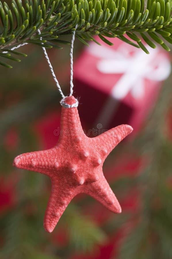 Estrellas de mar en el árbol de navidad imagen de archivo libre de regalías