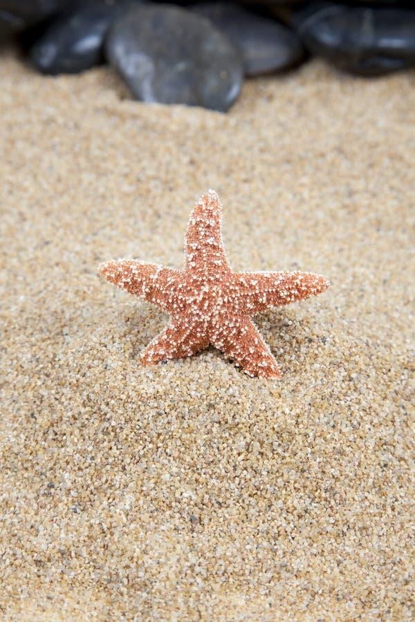 Estrellas de mar en fondo de la arena imagenes de archivo