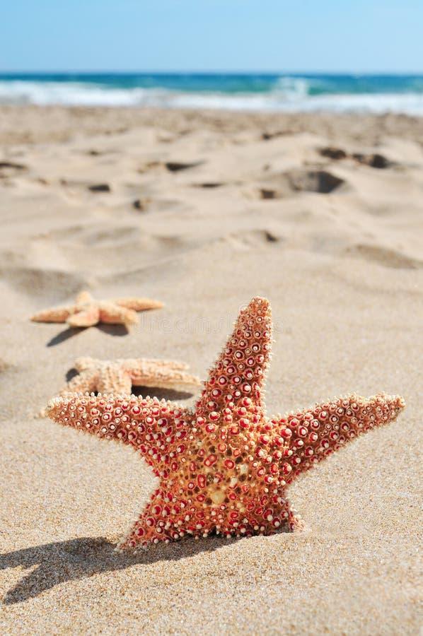 Download Estrellas De Mar En La Arena De Una Playa Foto de archivo - Imagen de orilla, fauna: 41910264