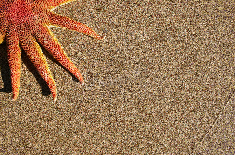 Estrellas de mar en la playa foto de archivo libre de regalías