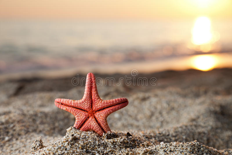 Estrellas de mar en la playa del arena de mar foto de archivo libre de regalías