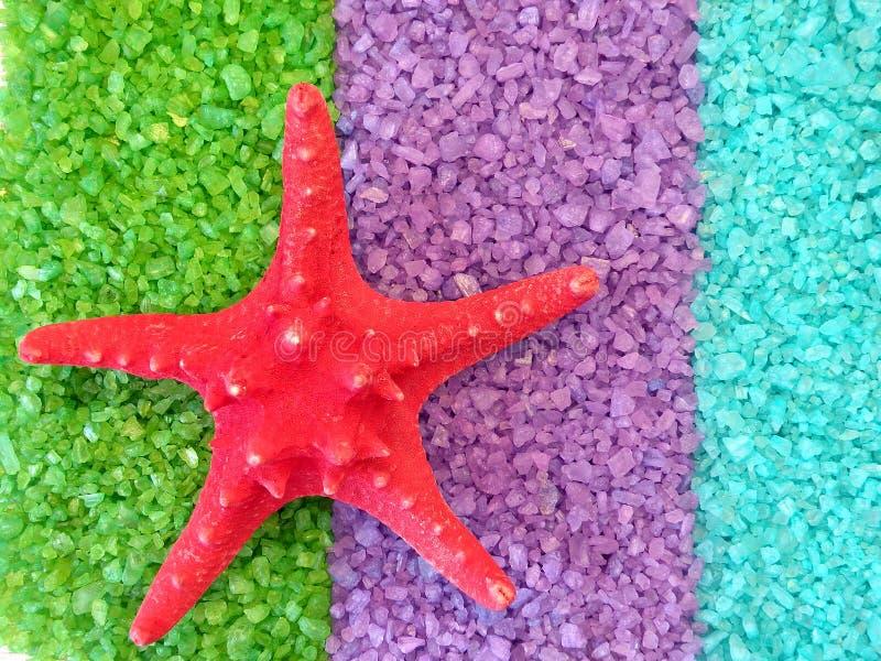 Estrellas de mar en la sal de baño fotos de archivo libres de regalías
