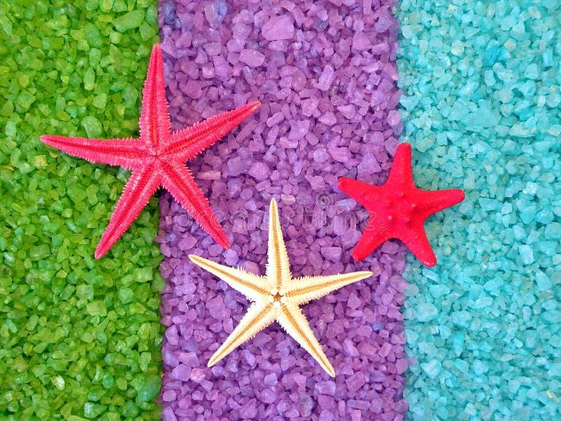 Estrellas de mar en la sal de baño foto de archivo libre de regalías