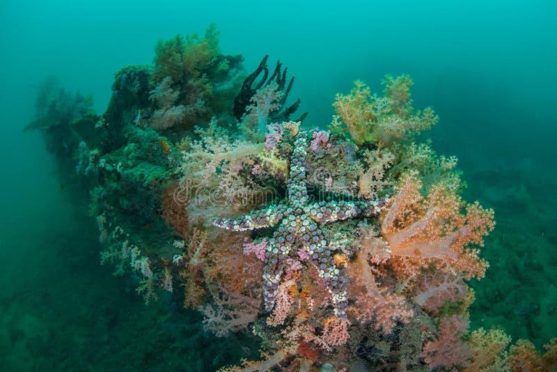 Estrellas de mar en ruina imagen de archivo libre de regalías