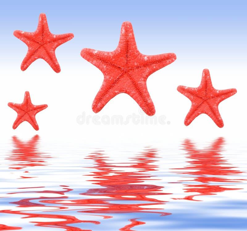 Estrellas de mar en un fondo azul foto de archivo libre de regalías