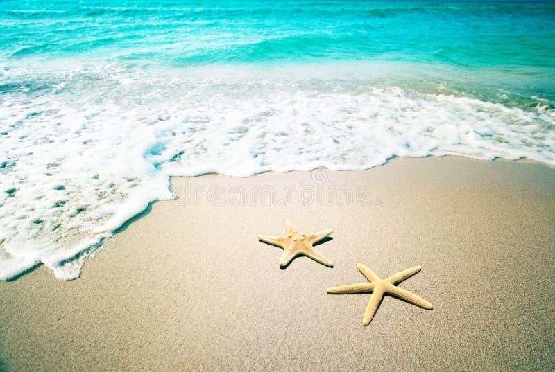 Estrellas de mar en una arena de la playa Estilo retro de la vendimia imagen de archivo