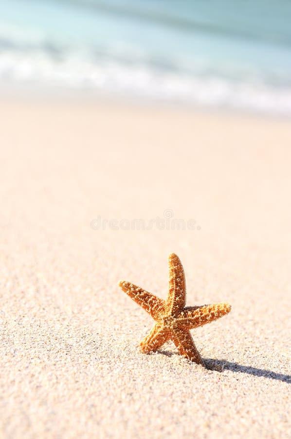 Estrellas de mar en vacaciones imágenes de archivo libres de regalías