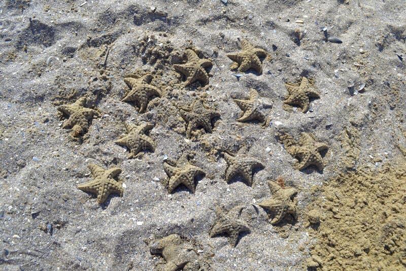 Estrellas de mar de la arena foto de archivo