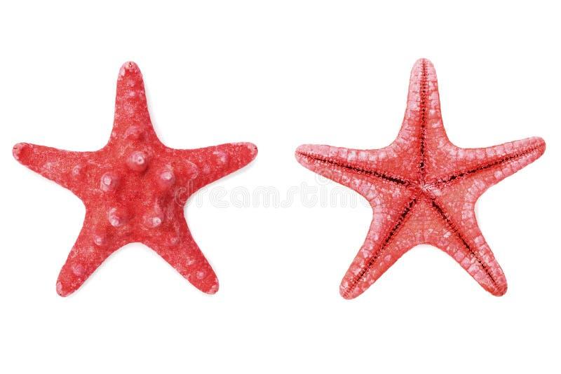 Estrellas de mar o estrella de mar rojas en el fondo blanco desde arriba fotografía de archivo