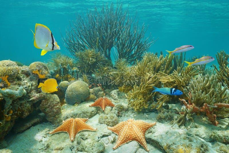 Estrellas de mar subacuáticas del arrecife de coral y pescados tropicales foto de archivo libre de regalías