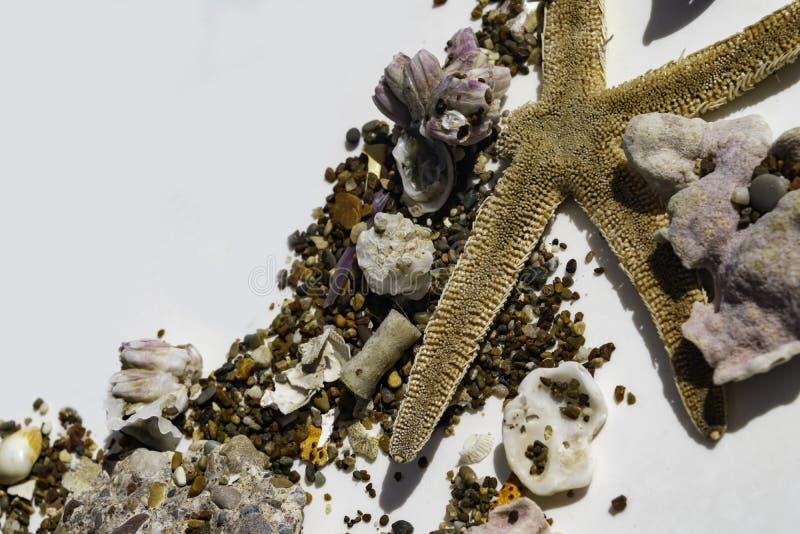 Estrellas de mar y cáscaras del mar en la arena aislada en el fondo blanco, foco selectivo fotografía de archivo libre de regalías