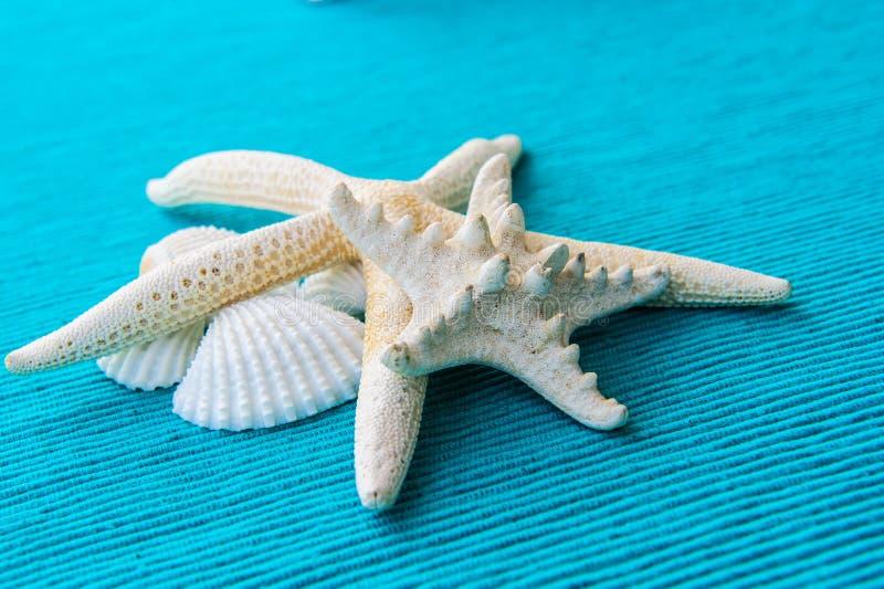 Download Estrellas De Mar Y Cáscaras Del Mar En Fondo Azul Foto de archivo - Imagen de marina, caribbean: 42434132