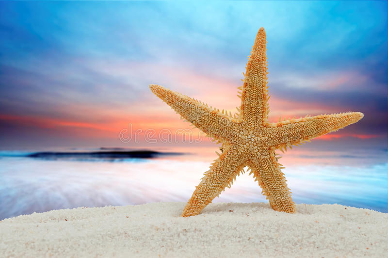 Estrellas de mar y puesta del sol imágenes de archivo libres de regalías