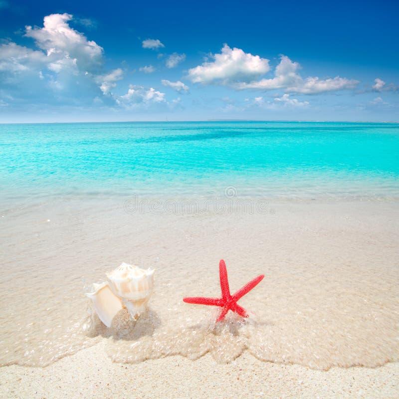 Estrellas de mar y seashell en playa tropical fotografía de archivo
