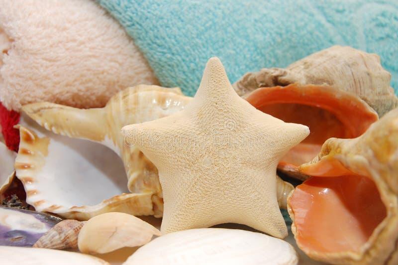 Estrellas de mar y seashells en fondo de la toalla imagen de archivo libre de regalías