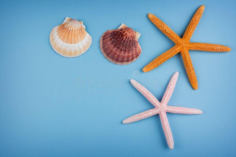 Estrellas de mar y shelles fotografía de archivo libre de regalías